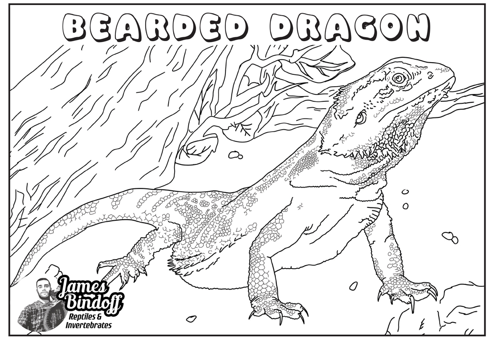 Bearded Dragon Colouring In Page Download