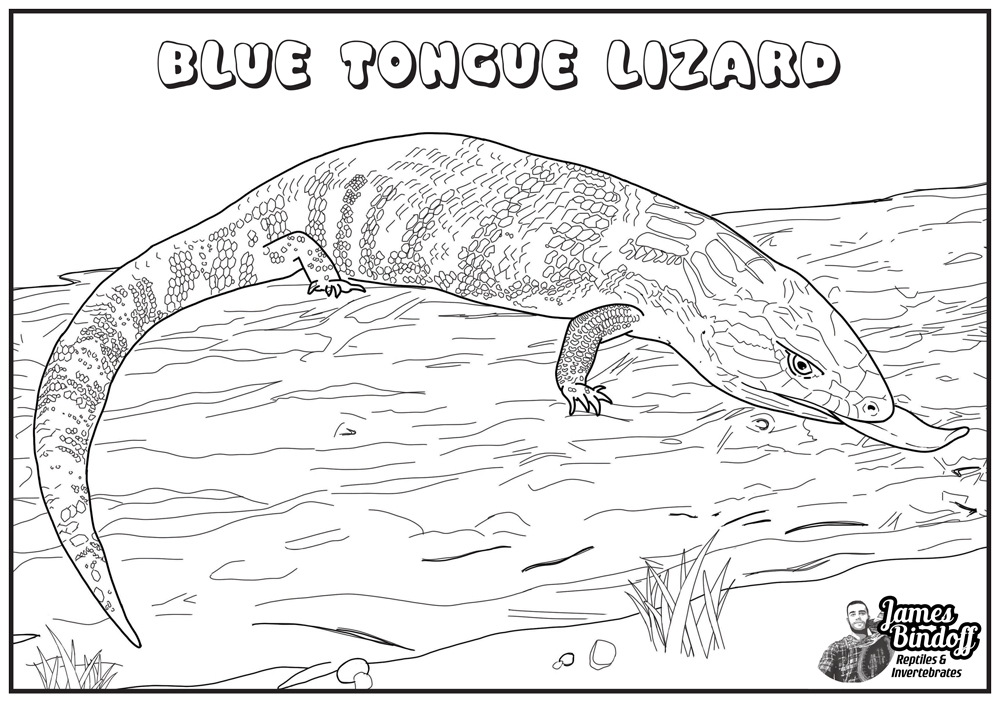 Blue Tongue Lizard Colouring In Page Download
