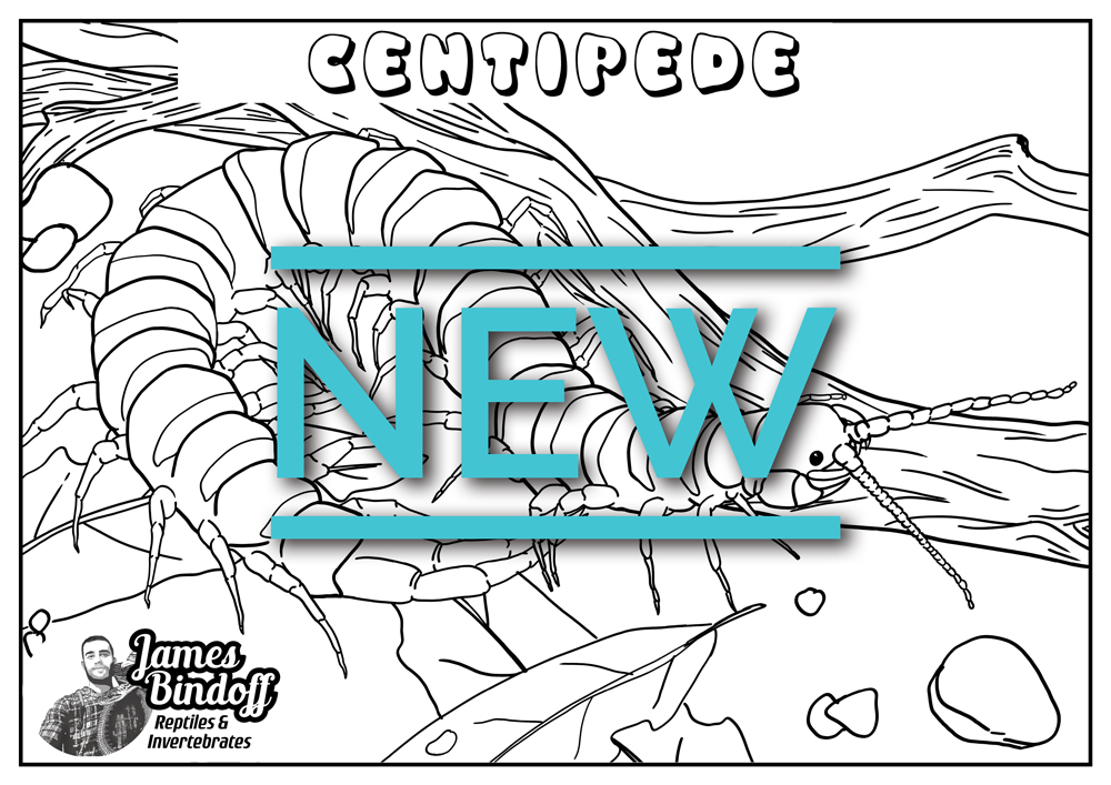 Centipede Colouring In Page Download