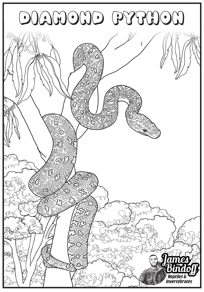Diamond Python Colouring In Page Download