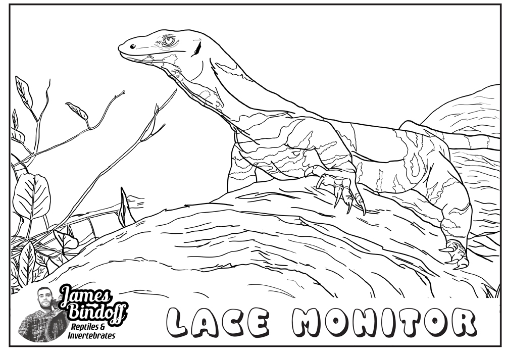 Lace Monitor Colouring In Page Download
