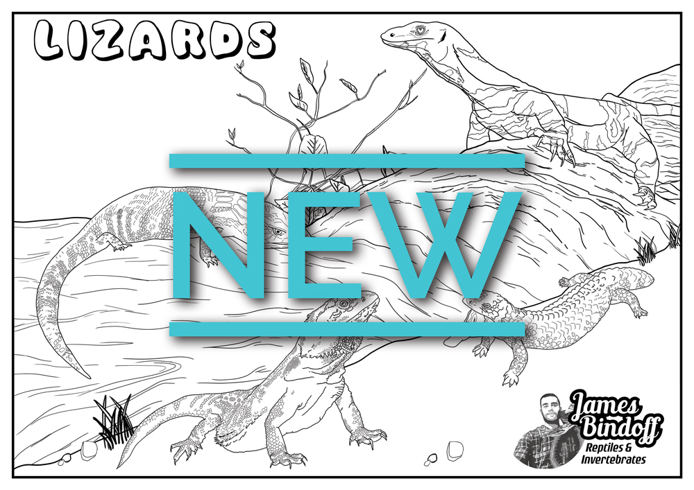 Lizards Colouring In Page Download