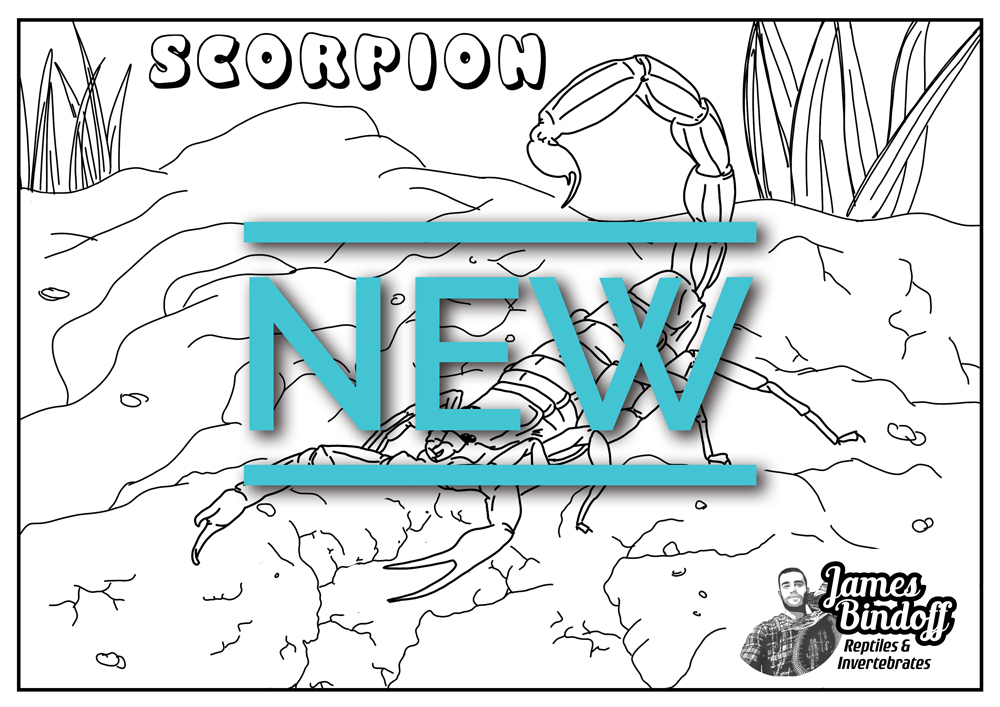Scorpion Colouring In Page Download