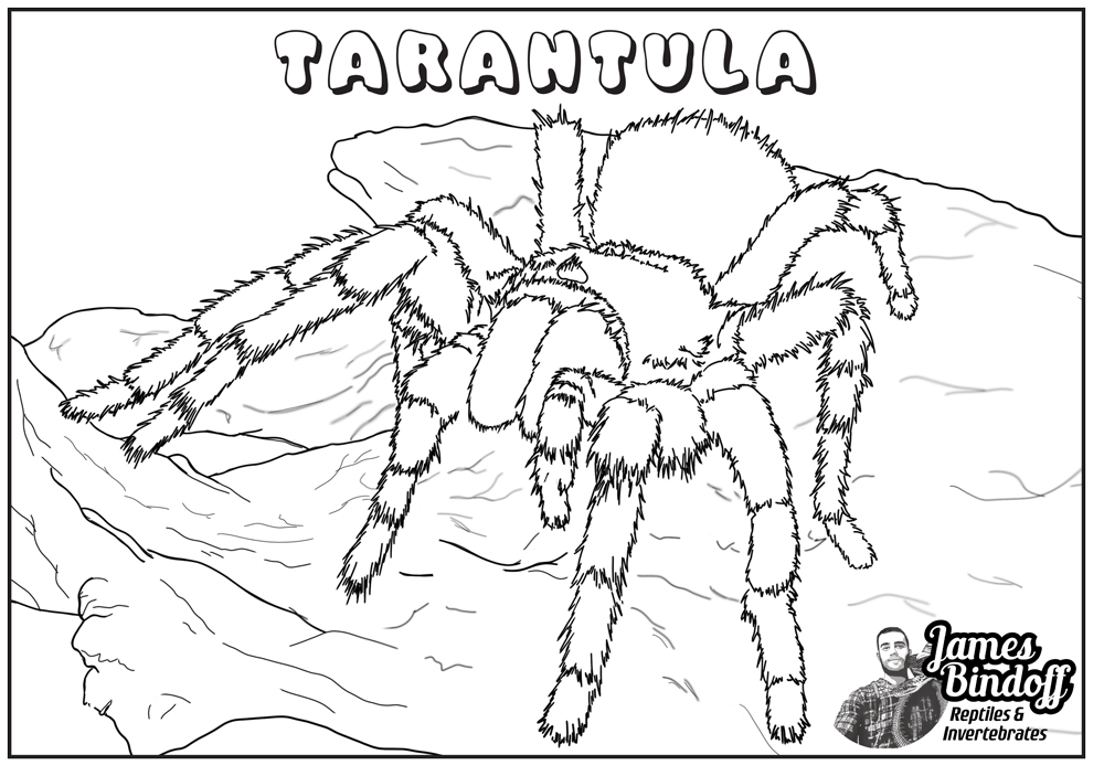 Tarantula Colouring In Page Download